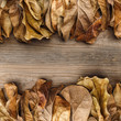 Dried leaves on an old wooden board. View from above. Close-up