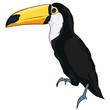 cartoon toucan, tukan, exotic bird,flying,bird,kreskówkowy tukan