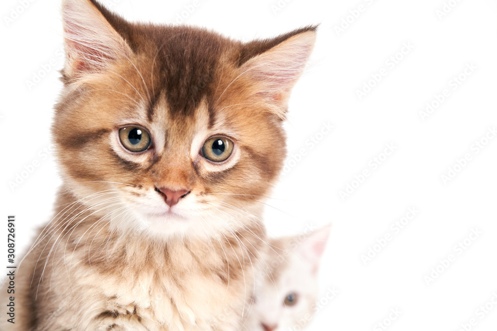Close up of sitting kitten isolated on white.