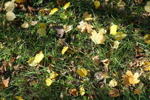 Varied Fallen Leaves On Green Grass From Above
