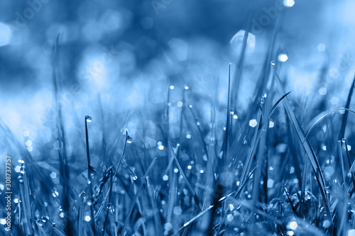 Fototapeta Wild meadow green grass in classic blue trendy color. background. Color of the year 2020. obraz na płótnie