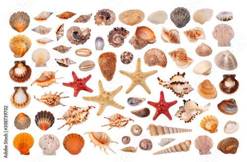 Fotografie, Obraz Set of seashells on white background