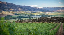 Central Otago Vineyard Surrounded By Rocky Mountains In New Zealand
