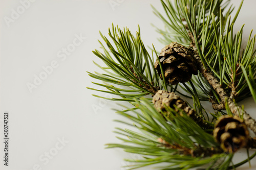 Obraz pine branch with cone on isolated white background  - fototapety do salonu