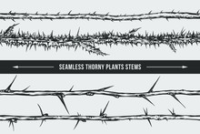 Seamless Thorny Plants Stems Vector Isolated Illustration. Blackberry, Thistle, Plum, Gooseberry. Great Graphic Element For Your Tattoo, Poster, Logo Design.