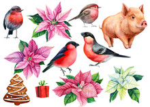 Set Of Poinsettia, Pig, Gift, Bird Bullfinch Christmas Decorations On A White Background, Watercolor Illustration, Hand Drawing