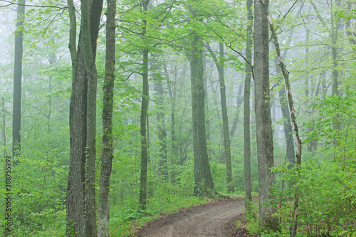Trail through foggy spring woodland, Kellogg Forest, Michigan, USA