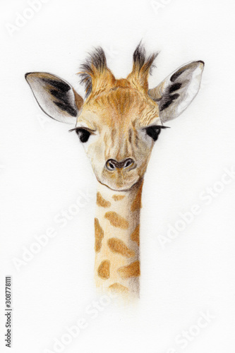 Baby giraffe illustration Wallpaper Mural