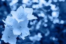 Classic Blue Background Made O...