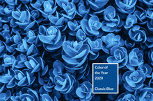 Blue Plant. Color Of The Year ...