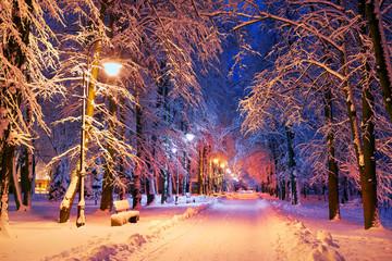Fototapeta Inspiracje na zimę evening park after snowfall