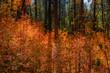 Fall for Planet Sedona