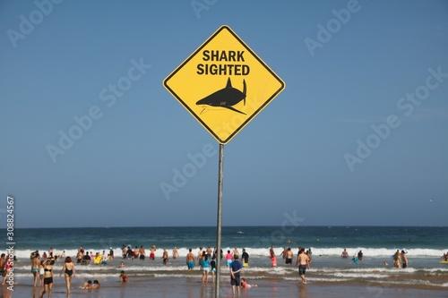 Shark sighted at the Beach in Sydney, Australia Wallpaper Mural