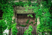 Overgrown Abandoned Building W...