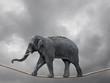 Leinwanddruck Bild - Elephant on rope balancing with storm clouds dramatic sky