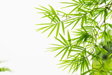 Green Leaf Bamboo Isolate On White Background