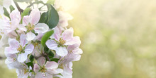 Beautiful Springtime Flowers O...