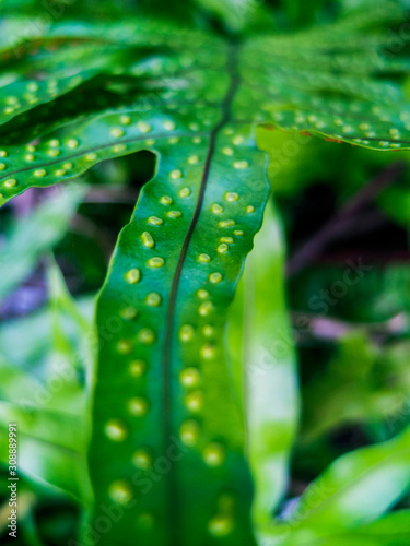 Green Finger Leaf with Dimples of Each Steam Canvas-taulu