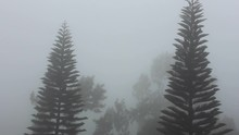 The Fog And The Clouds Covering The Hilly Landscape And The Windy Weather Making The Trees Shake. This Was Shot In A Hill Station Called Yercaud.
