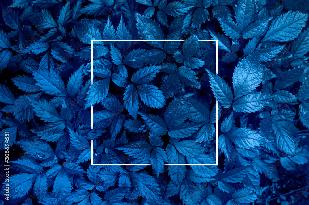 Fototapeta Plant background representing the color of the year 2020 classic blue. Toned photo, white frame and space for text
