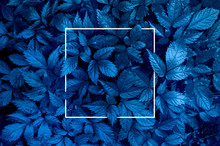 Plant Background Representing ...
