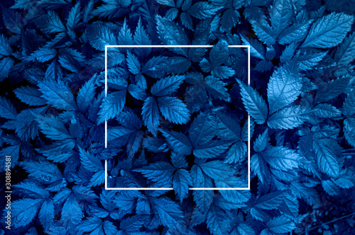 Plant background representing the color of the year 2020 classic blue. Toned photo, white frame and space for text