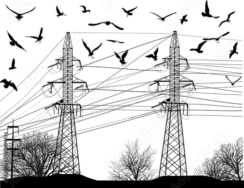 gulls above electric pylons isolated on white Canvas Print