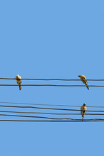 An Image From The Bottom Of Three Doves Hanging On Multiple Wires. The Background Is A Clear Blue Sky For Copy Space.