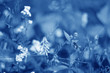 Classic Blue background. Color of the year 2020. Trendy Classic Blue color.