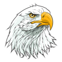 American Eagle Head