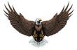 Bald eagle front