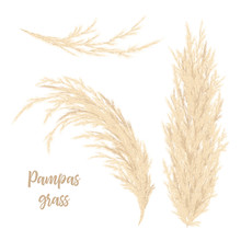 Pampas Grass Golden. Vector Il...