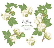Cotton Branch Set. Colorful Co...