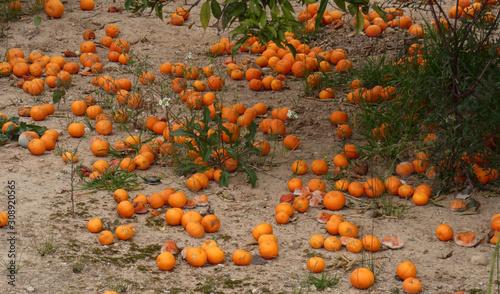 Photo  agricultura muerta