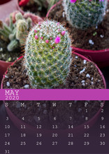 Calendar Of May 2020 With A Ca...