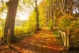 Fototapeta  - Sun shining through the trees in a forest with fallen leaves on a path during Autumn.