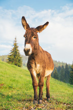 Picture Of A Funny Donkey At S...