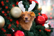 canvas print picture funny dog in antlers posing in a decorated christmas tree