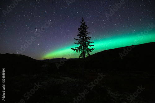 Northern lights/aurora borealis and starry sky from outdoors in the middle of the forest Wallpaper Mural