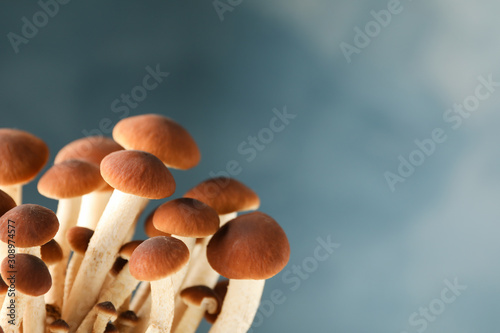 Photo Honey agaric mushrooms on blue background, close up