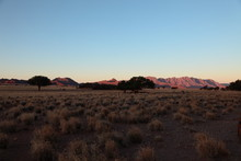 Open Dry Savannah Arid Landscape With Tall Grass And Desert Shrubs In Namibia Safari