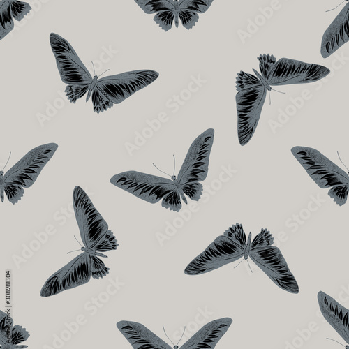 Seamless pattern with hand drawn stylized trogonoptera brookiana Canvas Print