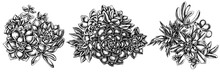 Flower Bouquet Of Black And White Succulent Echeveria, Succulent Echeveria, Succulent