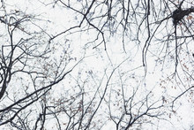 Tree Branches In The Forest