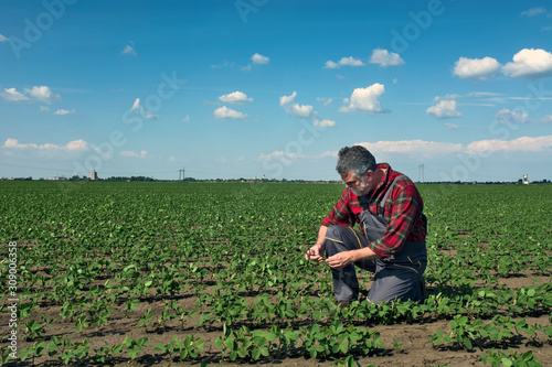 Agronomist in the field of soybeans Canvas Print
