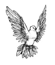 Beautiful Flying Dove. Flying Pigeon With Wings.
