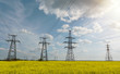 Power lines and high-voltage lines against the backdrop of blooming oilseed rape on a summer day.