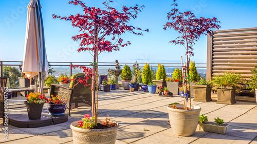 Fledgling Japanese maples on rooftop patio Fototapete