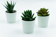 House plants. Scandinavian design interior