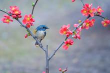 Bird And Flower. Plant, Blossom